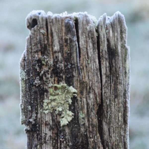 Photo de références pour artistes et dessinateurs nature flore végétaux